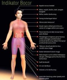 Obat Tradisional Ginjal Bocor
